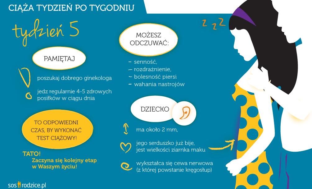 5 tydzień ciąży infografika