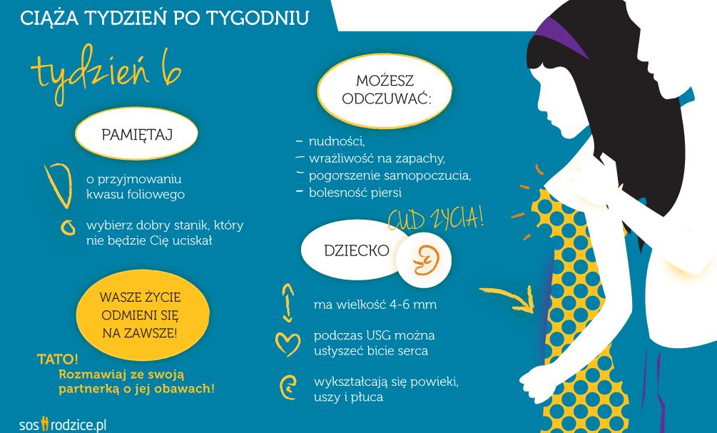 6 tydzień ciąży infografika