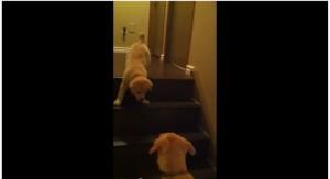 pies uczy