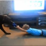 Pies to świetny opiekun
