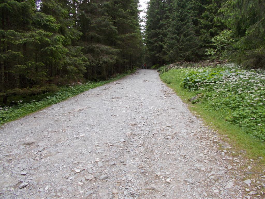 Tak wygląda trasa na Dolinie Kościeliskiej