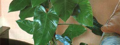 10 roślin, które lepiej trzymać z dala od dziecka
