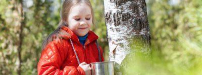 Sok z brzozy dla dziecka – idealnie wzmacnia na wiosnę?