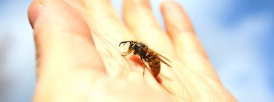 Dziecko użądlone przez owada – co robić?