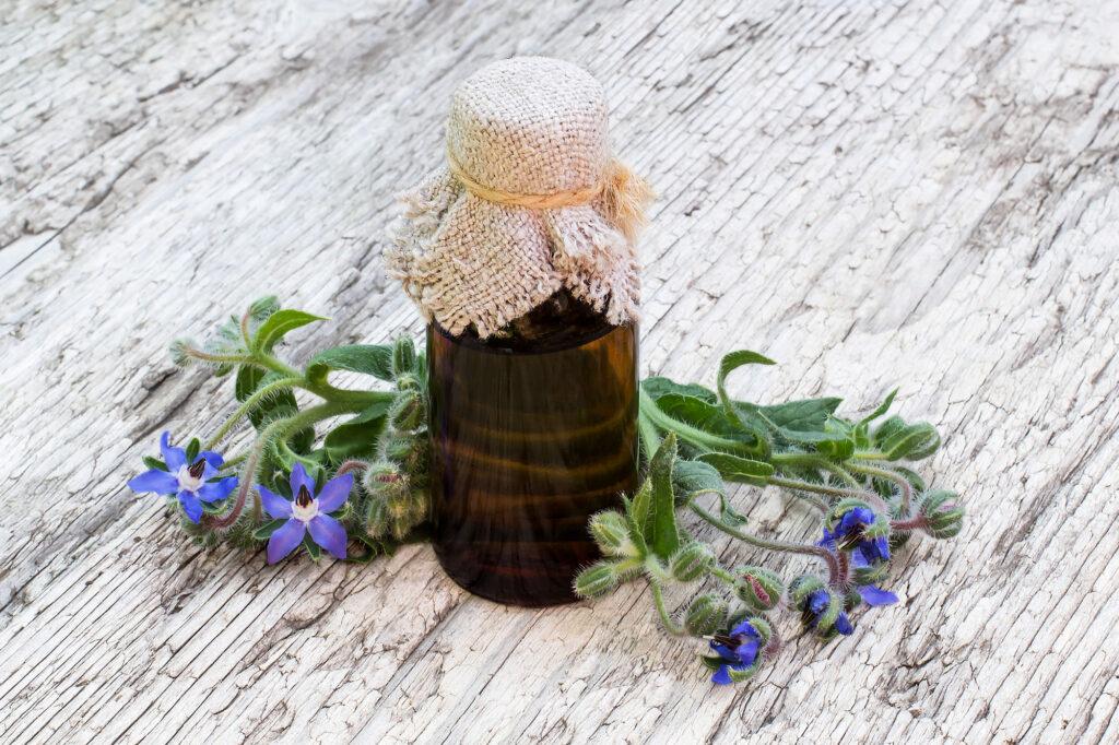 olej z ogórecznika
