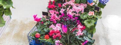 Kwiaty w pokoju dziecka – tak czy nie?