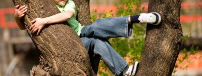 Dziecko chce wspinać się po drzewach. Pozwolić mu na to?
